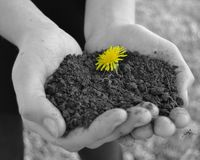 Spring Has Sprung. A color splashed flower in the hands of an angel Royalty Free Stock Photos