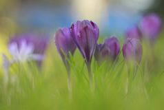 Spring has sprung Royalty Free Stock Images