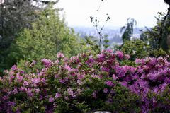 Flower landscape. Spring has sprung in the hills over looking the valley Royalty Free Stock Images