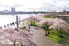 Spring has sprung in Portland Royalty Free Stock Photo