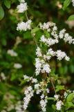 Spring has sprung. Random flowers along Natchez Trace Stock Images