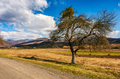 Spring has sprung in rural area. Tree on agricultural field with yellow weathered grass near the road. snowy peaks of mountain ridge in the distance. nature on Royalty Free Stock Images