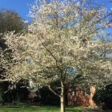 Spring has sprung. Spring tree in bloom Stock Photo