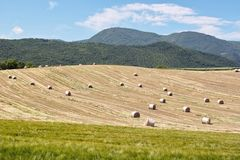 Spring haymaking Royalty Free Stock Photo