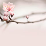 Spring header with copy space. Royalty Free Stock Images