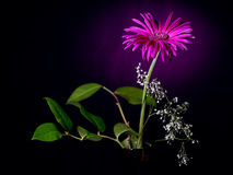 Spring herbera. Bouquet spring herbera in color light Royalty Free Stock Photography