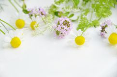 Spring herbs Royalty Free Stock Image