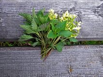 Spring herbs as posy. Royalty Free Stock Images