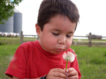 Young Boy Blowing a Dandelion stock image