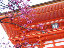Spring is Here. Plum blossoms against a tample in Japan Royalty Free Stock Images