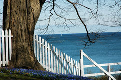 Spring Tree and Flowers. Pretty tree with spring flowers and Lake Ontarion in the background with white picket fence stock photo
