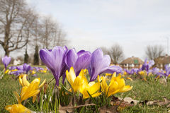 Spring is here Royalty Free Stock Photography