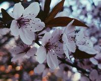 Spring is here. Beautiful flowers of the beautiful season Stock Image