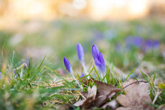 Spring is here Royalty Free Stock Images