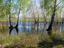 Spring high water. Long water in steppe lowlands of Altai keeps Stock Image