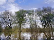 The spring high-water season on river. Flood caused by streams of snow melt water flowing into watercourses. Flooded floodplain forest, willow and osier royalty free stock images