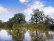 The spring high-water season on river. Flood caused by streams of snow melt water flowing into watercourses. Flooded floodplain forest, willow and osier stock image