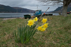 Spring in the Highlands Stock Photography