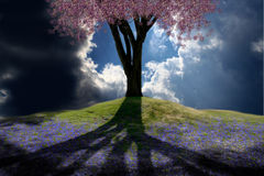 Spring Hill. Flowering tree on a hill Royalty Free Stock Image
