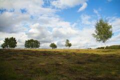 Spring Hill con el árbol de abedul que crece en el fondo del cielo azul brillante Fotografía de archivo