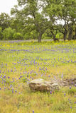 Spring In The Hill Country Stock Photo
