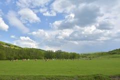 The spring on the hills. A spring on the hills Royalty Free Stock Photos