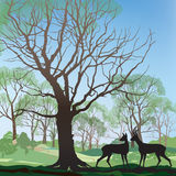 Spring hills and forest landscape Stock Images