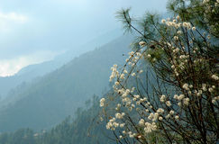 Spring in the Himalayas. Valley in the Himalayas in spring (march Royalty Free Stock Photos