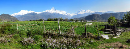 Spring in the Himalayas Royalty Free Stock Image