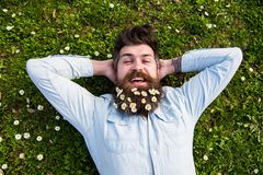 Spring holiday concept. Hipster on happy face lays on grass, top view. Guy looks nicely with daisy or chamomile flowers. In beard. Man with beard and mustache Stock Photo