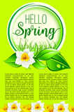 Spring holiday greeting poster of dafodil flowers. Hello Spring poster for springtime holidays greeting. Vector design of yellow blooming daffodils blossoms or Stock Photos