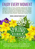 Spring holiday vector poster of daffodils bouquet Stock Image