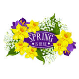 Spring holiday vector poster of daffodils bouquet Royalty Free Stock Image