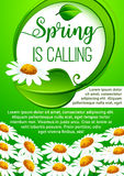 Spring holidays floral banner with daisy flowers. Spring holidays floral banner. Spring flower and green leaf arranged into round frame with greeting wishes Royalty Free Stock Photo