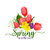 Spring holidays vector tulips flowers bouquet Royalty Free Stock Images