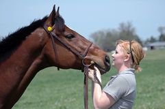 Spring Horse Stock Photo
