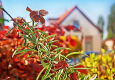 Spring house Stock Photos