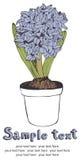 Spring hyacinth card Royalty Free Stock Photos