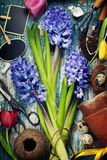 Spring hyacinth, easter eggs and garden tools Royalty Free Stock Photography