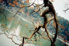 Spring. I took this shot at Hoan Kiem Lake, Hanoi, Vietnam Stock Images