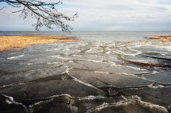 Spring ice drift. National park Kurshskaja sand-bar.  Spring day, coast  of  a gulf Kurshskiy Stock Photos