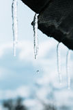 Spring icicles Royalty Free Stock Photo