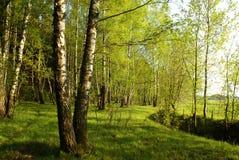 Spring idyllic landscape Stock Photography
