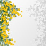 Spring illustration with a mimosa Stock Photo
