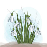 Spring illustration with snowdrop flower and leaf. Spring illustration with a bunch of snowdrop flower and leaf, with line decoration Royalty Free Stock Photo