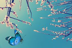 Spring is coming again Royalty Free Stock Photo
