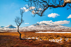 Spring image from the Swedish mountains Royalty Free Stock Photo