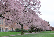 Spring In Campus Royalty Free Stock Photography