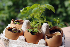 Free Spring In Eggshells Stock Photo - 20589940