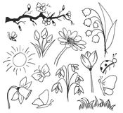 Spring ink drawing flowers  isolated Royalty Free Stock Images